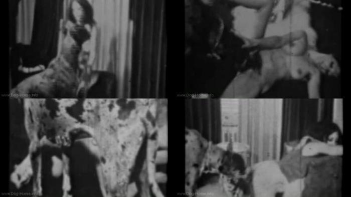 185564505 0540 dgsx fido goes down - Fido Goes Down - Dog Bestiality Video