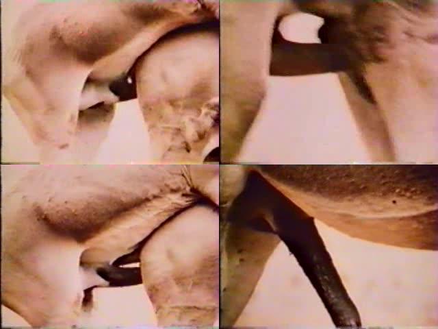 Porn Animal Cock